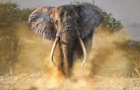हाथी के हमले से मौत, मचा कोहराम
