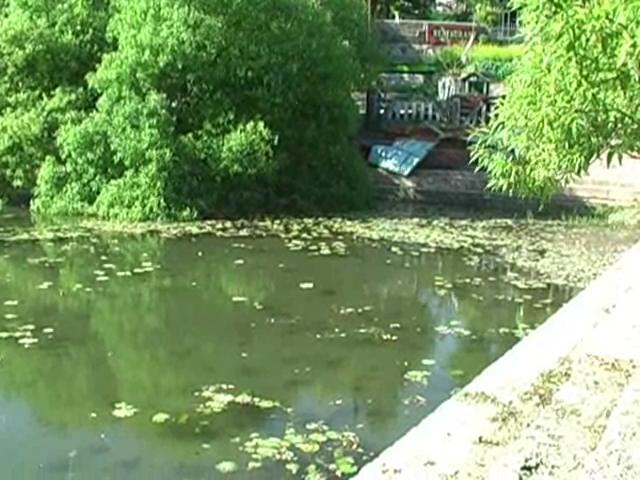 नैनीताल: इकलौता कमल तालाब हुआ बदहाली का शिकार
