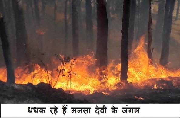 भयंकर आग की चपेट में हरिद्वार रेंज के जंगल…
