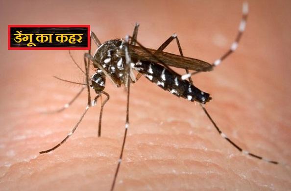 प्रदेश में लगातार बढ़ रहे हैं डेंगू के मामले… पढ़े पूरी खबर