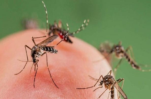 प्रदेश में डेंगू पीड़ितों की संख्या में हुआ इजाफा, महिला मरीज की मौत