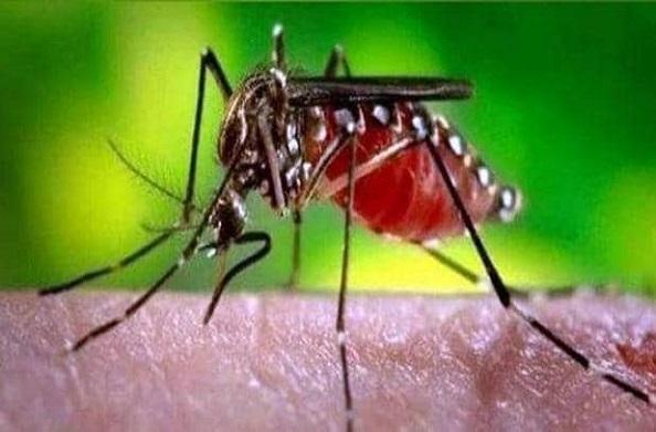 लगातार पैर पसार रहा है डेंगू… मरीजों की संख्या में हुआ इजाफा