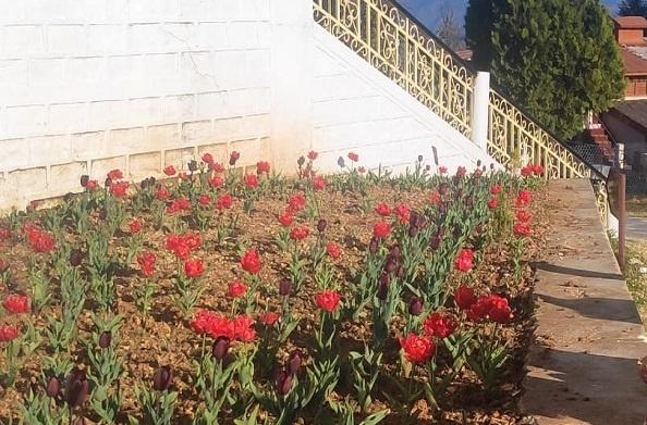पिथौरागढ़: ट्यूलिप गार्डन में खिले फूल… पर्यटन में लगेंगे चार चांद