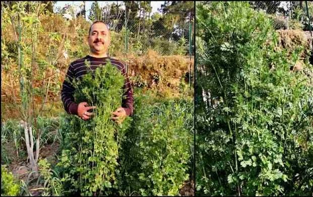 उत्तराखंड के इस किसान ने किया ऐसा काम, जिससे गिनीज बुक ऑफ वर्ल्ड रिकॉर्ड में दर्ज हो गया उसका नाम