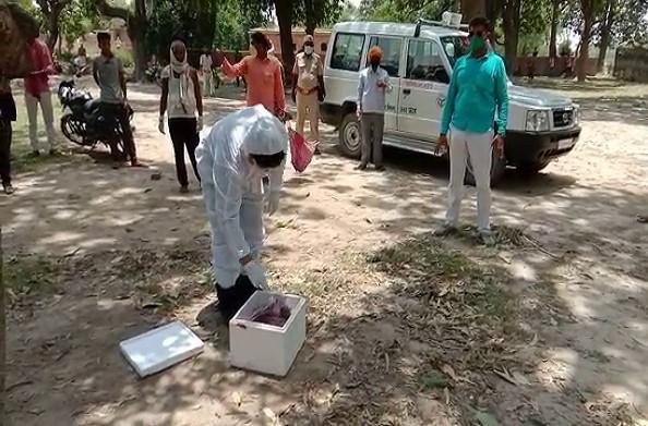 बलिया: इस गांव में हो रही है चमगादड़ों की मौत… दहशत में ग्रामीण