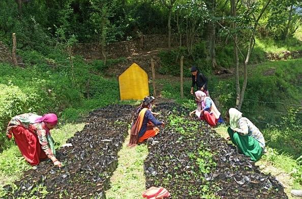 टिहरी: लॉकडाउन में कन्याड़ी गांव की महिलाओं ने तैयार कर दी सगंध पादप की नर्सरी