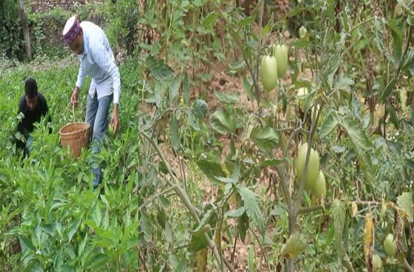 रुद्रप्रयाग: मजबूत इच्छा शक्ति से कर दिया कमाल, सब्जी उत्पादन से नरेंद्र कफोला कर रहे स्वरोजगार