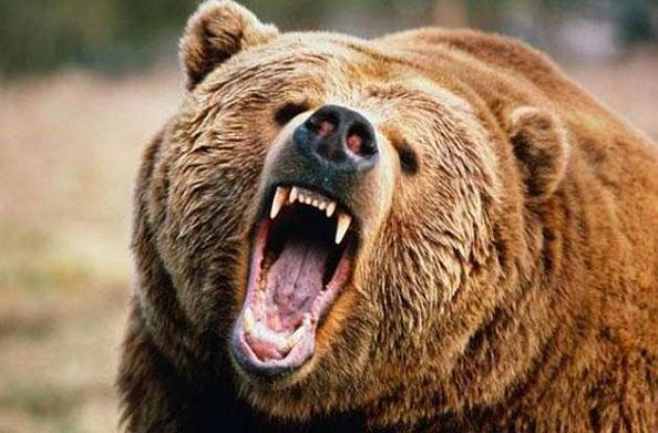 चमोली: भालू के आतंक से दहशत में ग्रामीण, वन विभाग ने लोगों को रात में बाहर न जाने की दी सलाह