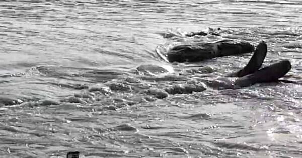 साथ रहने का दबाव बनाने पर प्रेमिका को कोसी नदी में फेंका