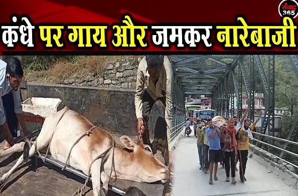 थराली: स्थानीय युवाओं ने किया गाय का रेस्क्यू, युवाओं ने की गाय संरक्षण की मांग