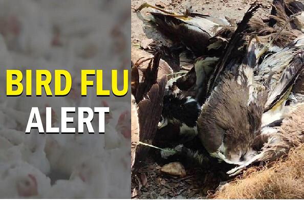 कोरोना के बीच बर्ड फ्लू का खतरा, अलग-अलग राज्यों में हो रही पक्षियों की मौतें, उत्तराखंड समेत कई राज्यों में अलर्ट जारी