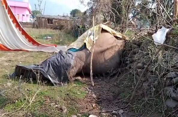 कोटद्वारः चीलरखाल में मादा हथिनी की संदिग्ध परिस्थितियों में मौत