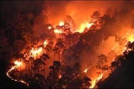 फायर सीजन के दौरान वानाग्नि की घटनाओं पर वन विभाग की बागेश्वर वासियों से अपील
