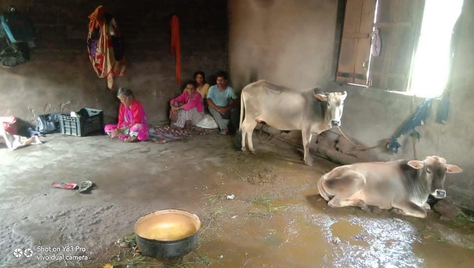 पौड़ी : टपकती छत, कीचड़ और मवेशियो के बीच में रहने को मजबूर गोदा देवी ,एक मजबूत छत की दरकार, मदद मांग रही बेबस महिला