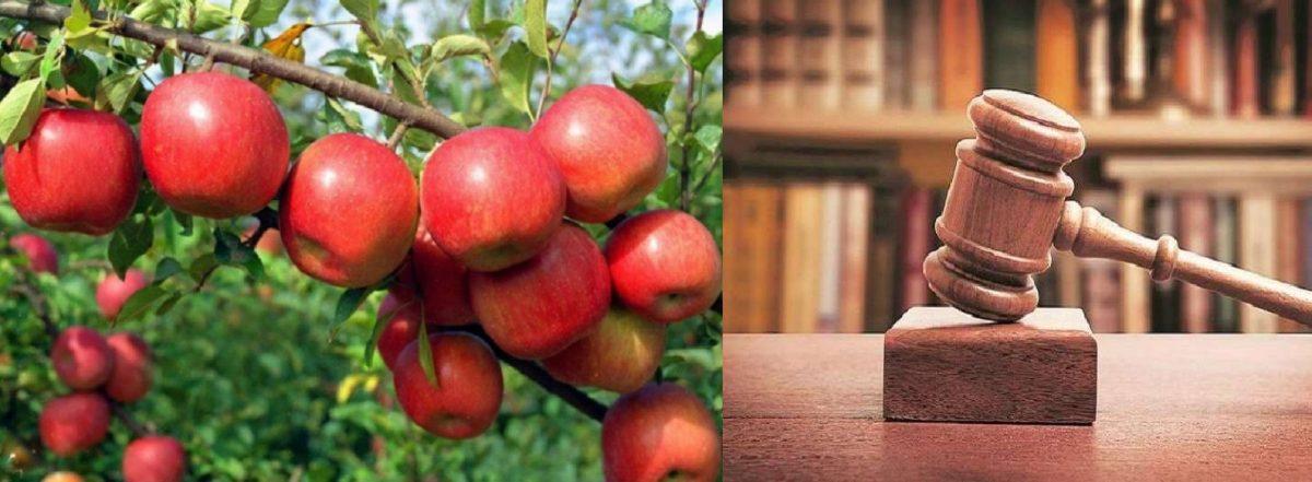 खुशखबरी: स्थायी लोक अदालत देहरादून में हुआ फैसला, बीमा कंपनी ने सेब उत्पादकों को किया भुगतान