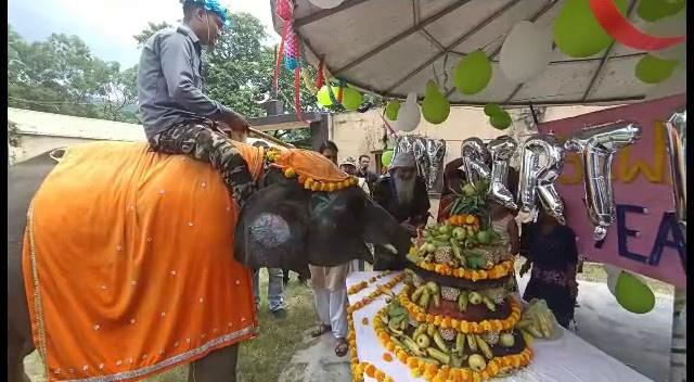 सावन हाथी हुआ 3 साल का, कोर्बेट प्रशासन ने 1 कुंटल 30 किलो का केक काटकर मनाया सावन हाथी का जन्मदिन